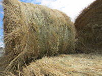 2015 1st CUT GRASS HAY ROUND BALES FOR SALE