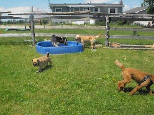 (( WE CAN PICK UP // DROP OFF YOUR DOG !! )) Kawartha Lakes Peterborough Area image 5