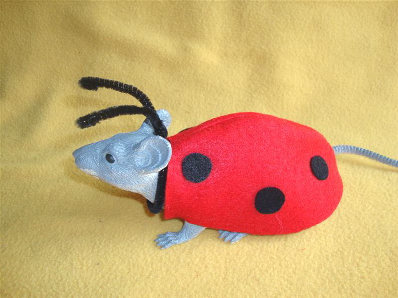 Ladybug Costume for Rat from Petrats
