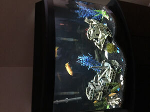 36 gallon tank with stand and more