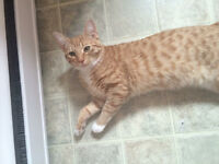 FREE 9 month old fixed male kitten