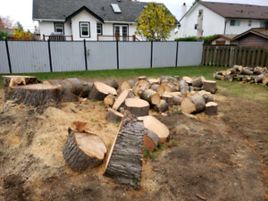 Firewood or woodworking project