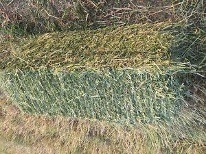 hay/ square bales