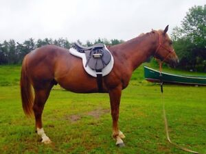 Matching Engish Tack lot for sale! Perfect-New condition
