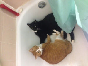 Home for my Cats (willing to pay)