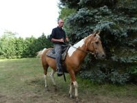 SELL OR TRADE 13 YR OLD PALOMINO PAINT MARE