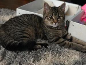 Female kitten for rehoming