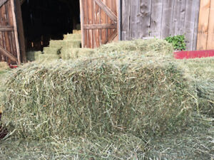1st cut hay must go need the room Timothy/ alfalfa mix