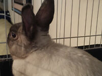 LOVING BUNNY IN NEED OF A HOME