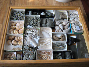 lot de minéraux pierres cristal cristaux fossiles et coquillage Lac-Saint-Jean Saguenay-Lac-Saint-Jean image 3