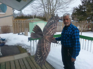 RC EPP Eagle with Brushless M, Speed C, Servos and 6ch Rx Cornwall Ontario image 3