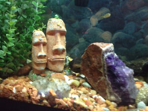 3 PEA PUFFERS  NEW tall 13 g. aquarium complete REDUCED