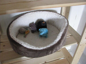 Large Cat Bed & Toys