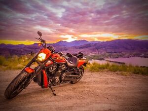2011 10th anniversary vrod muscle