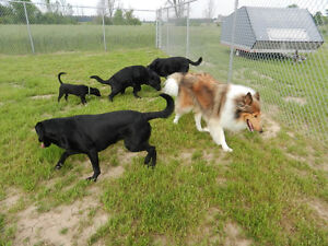 Dog Daycare and Boarding Kennel London Ontario image 8
