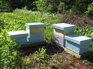 Honey Bees & Hives to sell