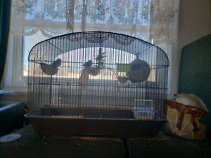 Bird cage and Finches .