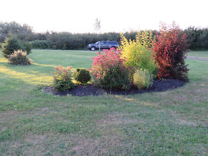 TWO BEAUTIFUL LANDSCAPED BUILDING  LOTS. RED HEAD