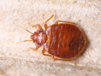 GUARANTEED BED BUG, PESTS& ANIMAL REMOVAL LOW PRICE@6479147378