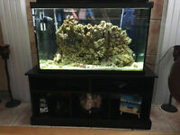 Aquarium /full equipment + extras