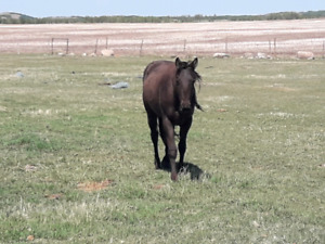 3 year old quarter horse