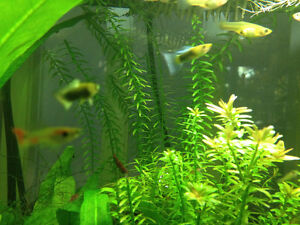 Guppies and more for sale