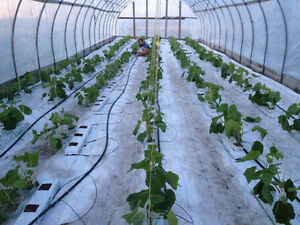 Hydroponic vegetable greenhouse for sale