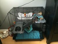 TWO DUMBO RATS AND ALL ACCESSORIES NEEDED | 100$ OBO | MUST GO