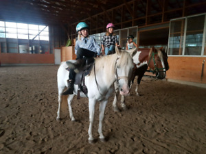 Sweet white mare - Ride or Drive!