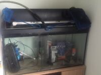 120l fish tank and cabinet