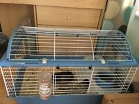 For sale 2 female Guinea pigs with cage