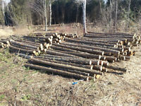 Posts for fence