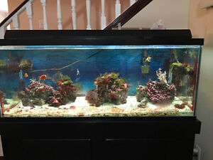 75 gallon Tank For Sale Need It Gone ASAP Because I'm Moving