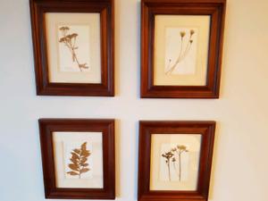 Pressed Plant Prints