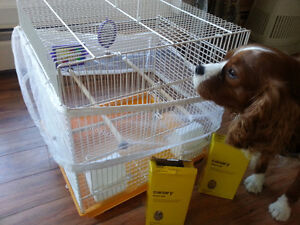 Canary, Budgie, small birds cage