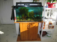Fish Tank, Stand, All Accessories