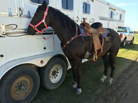 1D/2D Barrel Horse/All Around Mare For Sale