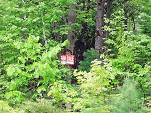 Lot For Sale 80 front by 153 depth Georgian Bay on Bellehumeur