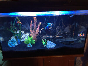 45gallon fish tank with fish, accessories and stand!