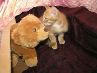 ~~~ Adopt a Rescue Kitten! Adorable, Sweet and Winsome ~~~