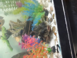 Home needed for 2 LG striped catfish