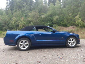Bella BLUE 2007 GT Mustang Convertible