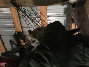Free kittens looking for forever homes Regina Regina Area image 3