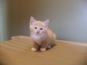 3 Kittens Need New Homes