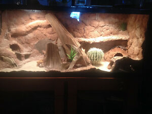 Obo 4' custom tank with or without leopard geckos