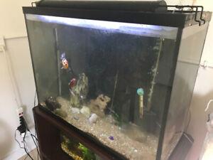 Goldfish and 36 gallon aquarium