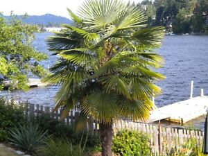 Lake Front Vacation Rental on Long Lake Nanaimo BC