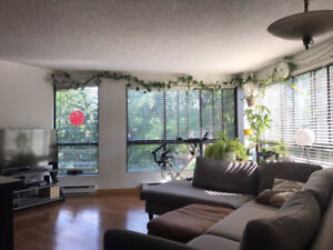 31/2 for rent at Nuns' Island (furnished, internet included)