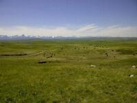 Native Grass Pasture Farm Ranch Land