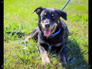 Niagara Dog Rescue - Moe Wants to be Your Best Friend